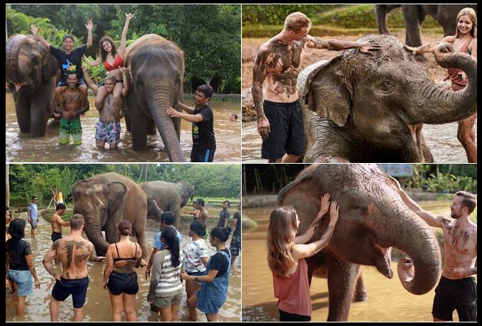 Bali Zoo - Elephant Mud Fun (Afternoon Session)